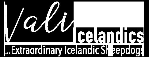 Vali Icelandics